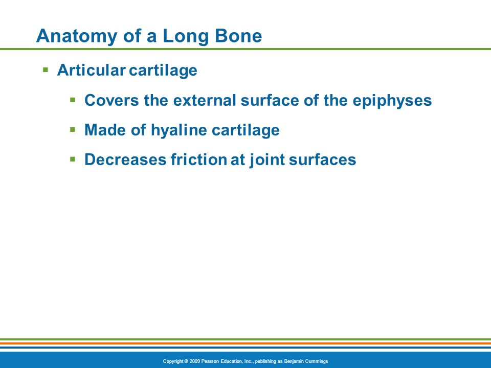 Copyright © 2009 Pearson Education, Inc., publishing as Benjamin Cummings Anatomy of a Long Bone  Articular cartilage  Covers the external surface o