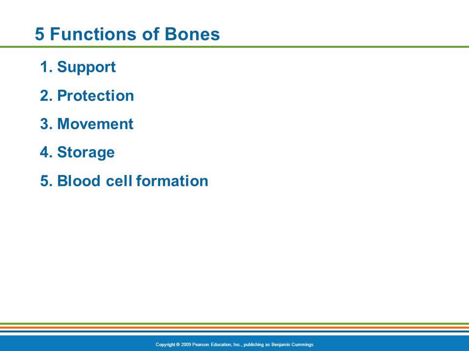 Copyright © 2009 Pearson Education, Inc., publishing as Benjamin Cummings 5 Functions of Bones 1. Support 2. Protection 3. Movement 4. Storage 5. Bloo