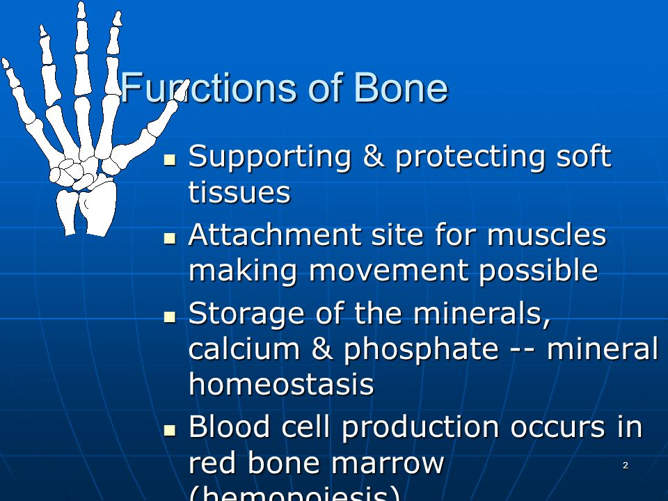 13 Intramembranous Bone Formation Intramembranous Bone Formation Mesenchymal cells become osteoprogenitor cells then osteoblasts.