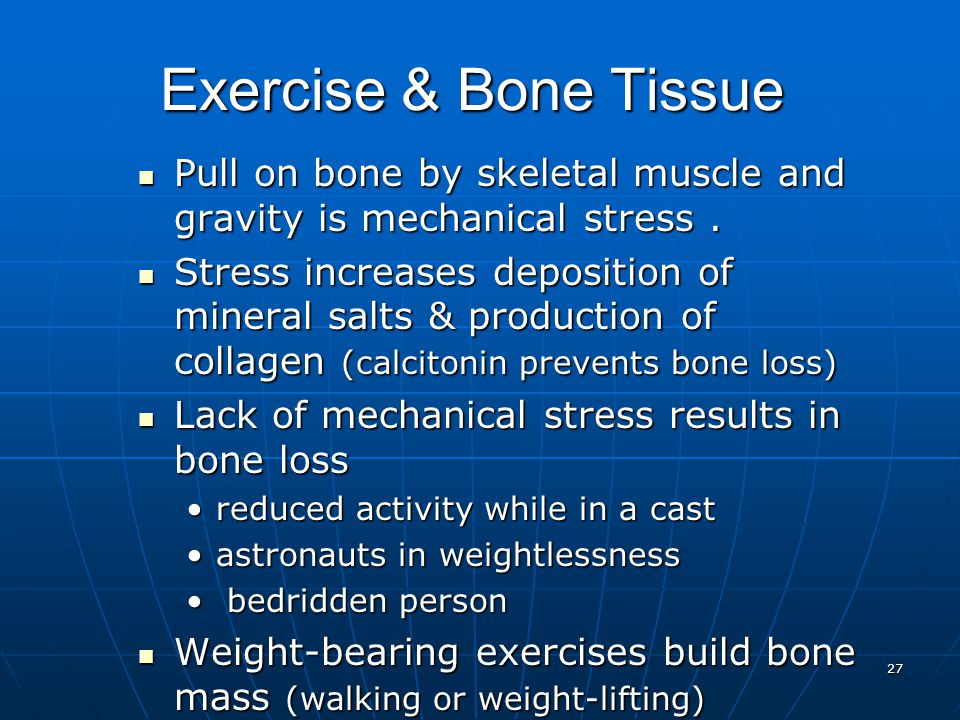 27 Exercise & Bone Tissue Pull on bone by skeletal muscle and gravity is mechanical stress.