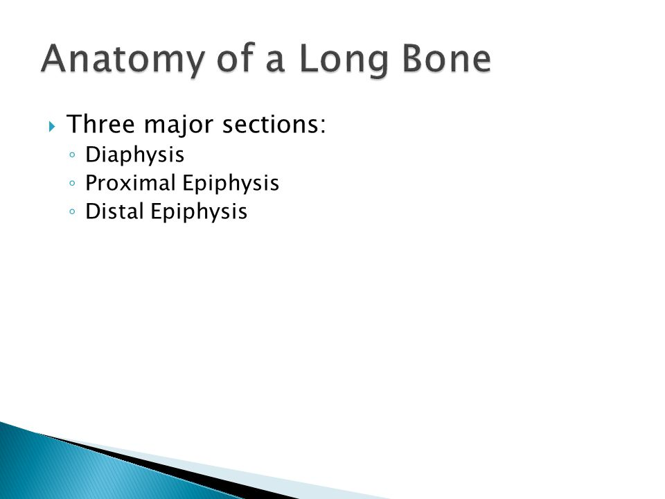 Table 5.1 Bone Markings (1 of 3).