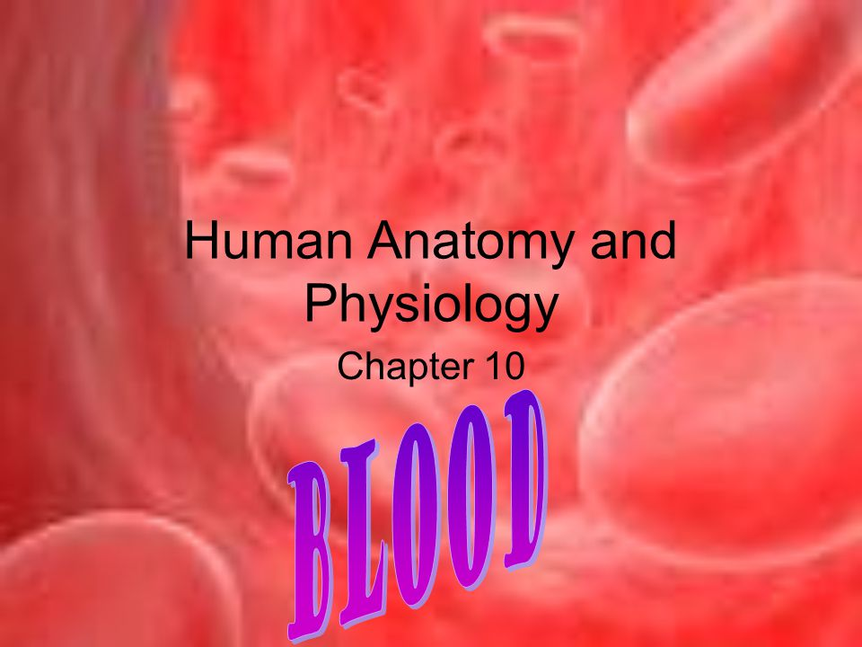 Human Anatomy and Physiology Chapter 10