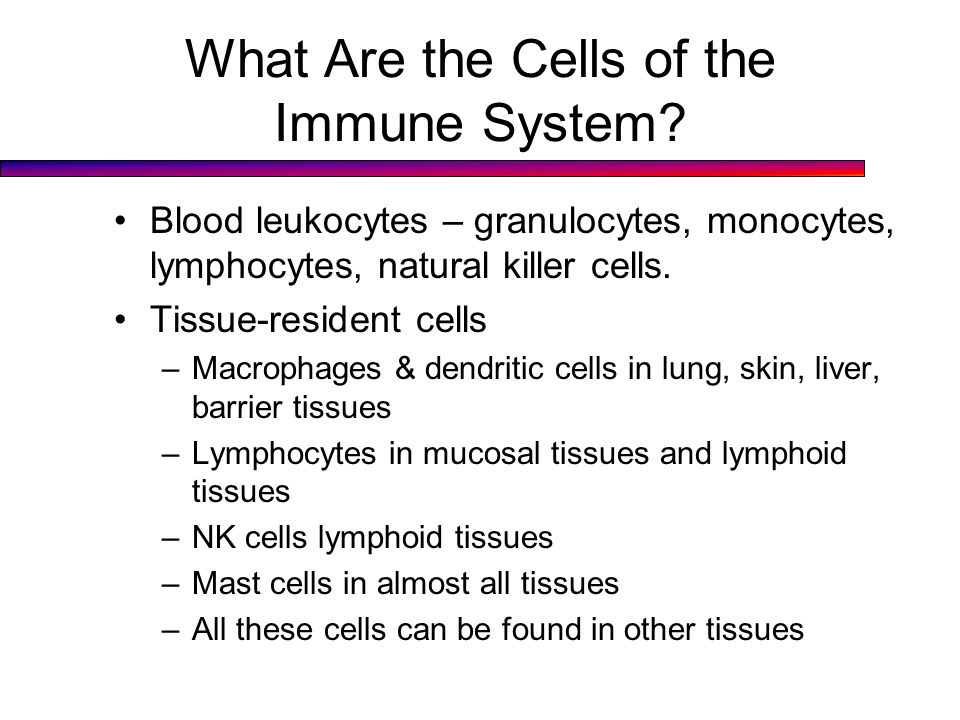 What Are the Cells of the Immune System.