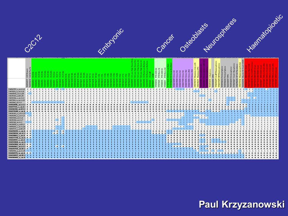 Haematopioetic Embryonic Osteoblasts Neurospheres Cancer C2C12 Paul Krzyzanowski