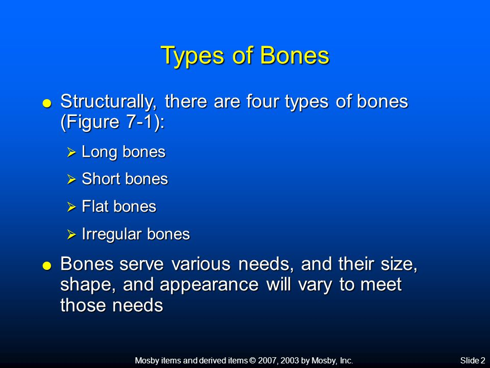 Mosby items and derived items © 2007, 2003 by Mosby, Inc.Slide 2 Types of Bones  Structurally, there are four types of bones (Figure 7-1):  Long bones  Short bones  Flat bones  Irregular bones  Bones serve various needs, and their size, shape, and appearance will vary to meet those needs