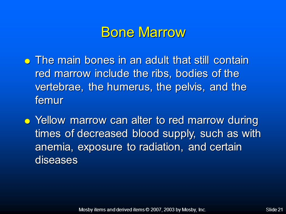 Mosby items and derived items © 2007, 2003 by Mosby, Inc.Slide 21 Bone Marrow  The main bones in an adult that still contain red marrow include the ribs, bodies of the vertebrae, the humerus, the pelvis, and the femur  Yellow marrow can alter to red marrow during times of decreased blood supply, such as with anemia, exposure to radiation, and certain diseases