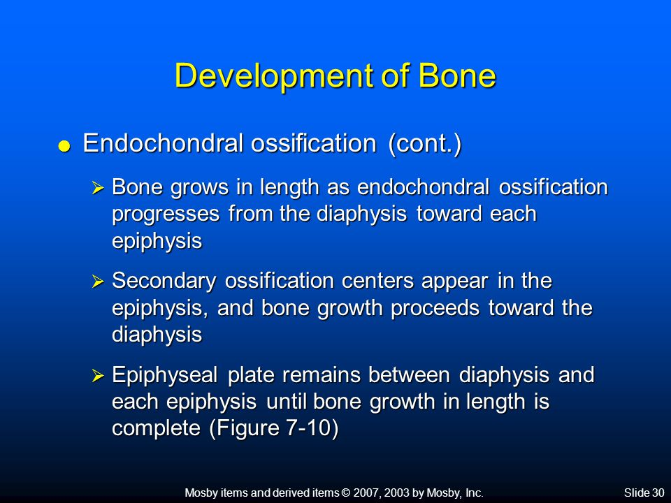 Mosby items and derived items © 2007, 2003 by Mosby, Inc.Slide 30 Development of Bone  Endochondral ossification (cont.)  Bone grows in length as endochondral ossification progresses from the diaphysis toward each epiphysis  Secondary ossification centers appear in the epiphysis, and bone growth proceeds toward the diaphysis  Epiphyseal plate remains between diaphysis and each epiphysis until bone growth in length is complete (Figure 7-10)