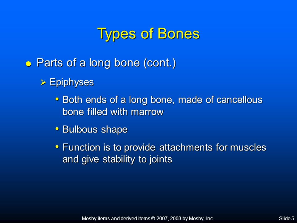 Mosby items and derived items © 2007, 2003 by Mosby, Inc.Slide 5 Types of Bones  Parts of a long bone (cont.)  Epiphyses Both ends of a long bone, made of cancellous bone filled with marrow Both ends of a long bone, made of cancellous bone filled with marrow Bulbous shape Bulbous shape Function is to provide attachments for muscles and give stability to joints Function is to provide attachments for muscles and give stability to joints