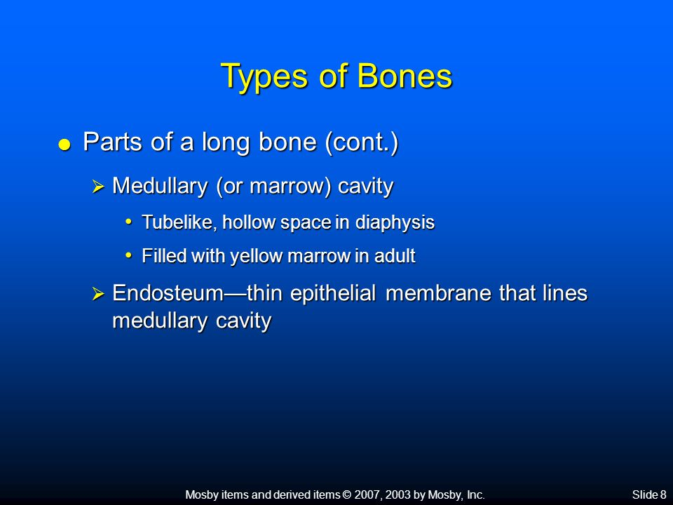 Mosby items and derived items © 2007, 2003 by Mosby, Inc.Slide 8 Types of Bones  Parts of a long bone (cont.)  Medullary (or marrow) cavity Tubelike, hollow space in diaphysis Tubelike, hollow space in diaphysis Filled with yellow marrow in adult Filled with yellow marrow in adult  Endosteum—thin epithelial membrane that lines medullary cavity
