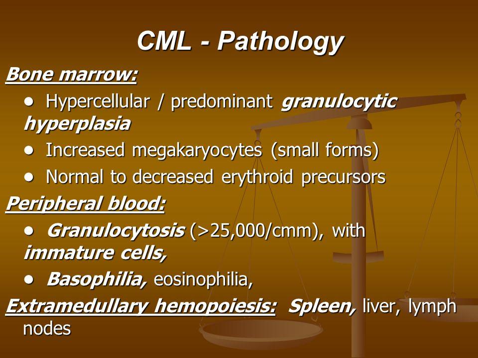 CML - Pathology Bone marrow: Hypercellular / predominant granulocytic hyperplasia Hypercellular / predominant granulocytic hyperplasia Increased megakaryocytes (small forms) Increased megakaryocytes (small forms) Normal to decreased erythroid precursors Normal to decreased erythroid precursors Peripheral blood: Granulocytosis (>25,000/cmm), with immature cells, Granulocytosis (>25,000/cmm), with immature cells, Basophilia, eosinophilia, Basophilia, eosinophilia, Extramedullary hemopoiesis: Spleen, liver, lymph nodes