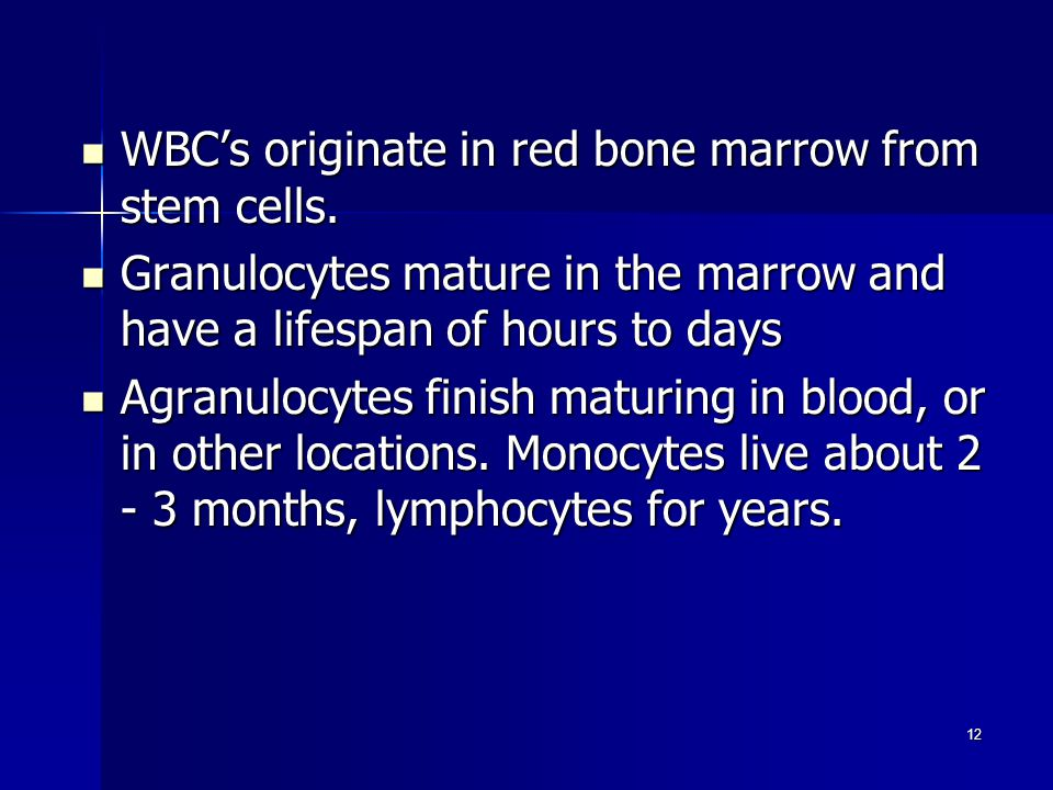 WBC's originate in red bone marrow from stem cells.
