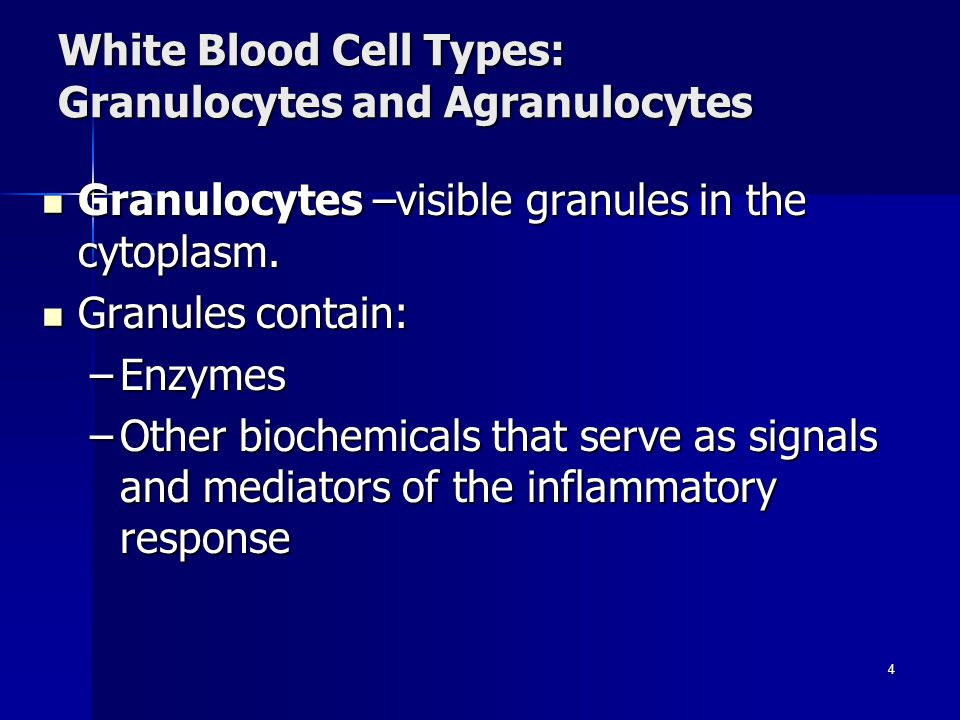 White Blood Cell Types: Granulocytes and Agranulocytes Granulocytes –visible granules in the cytoplasm.
