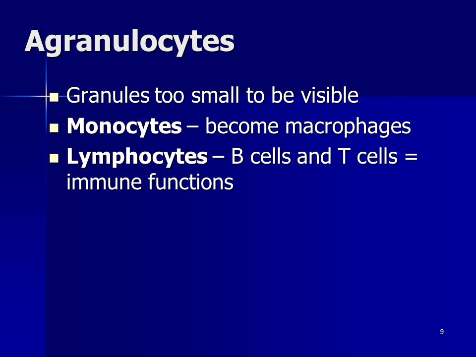 Agranulocytes Granules too small to be visible Granules too small to be visible Monocytes – become macrophages Monocytes – become macrophages Lymphocytes – B cells and T cells = immune functions Lymphocytes – B cells and T cells = immune functions 9