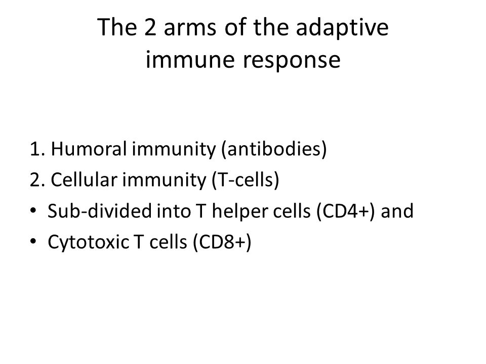 The 2 arms of the adaptive immune response 1. Humoral immunity (antibodies) 2.
