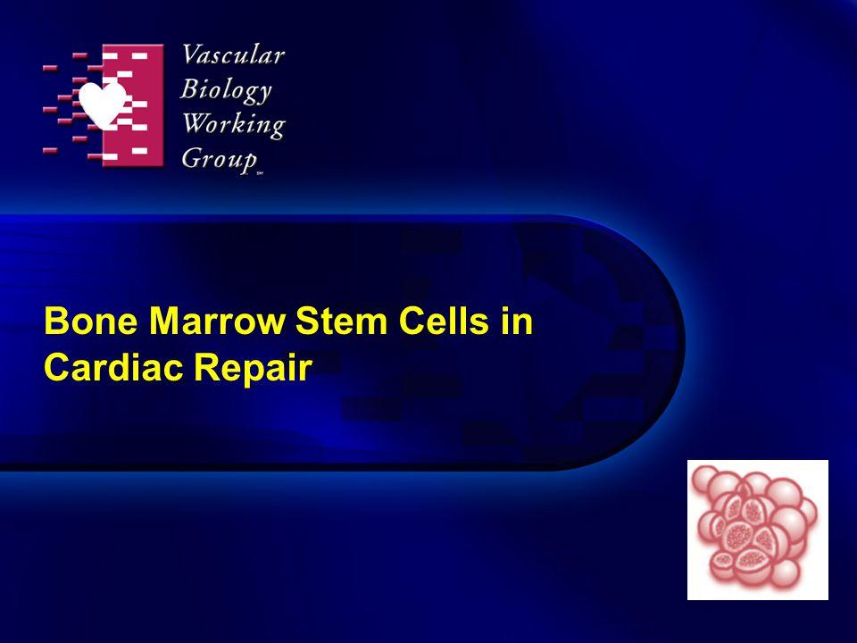 Bone Marrow Stem Cells in Cardiac Repair