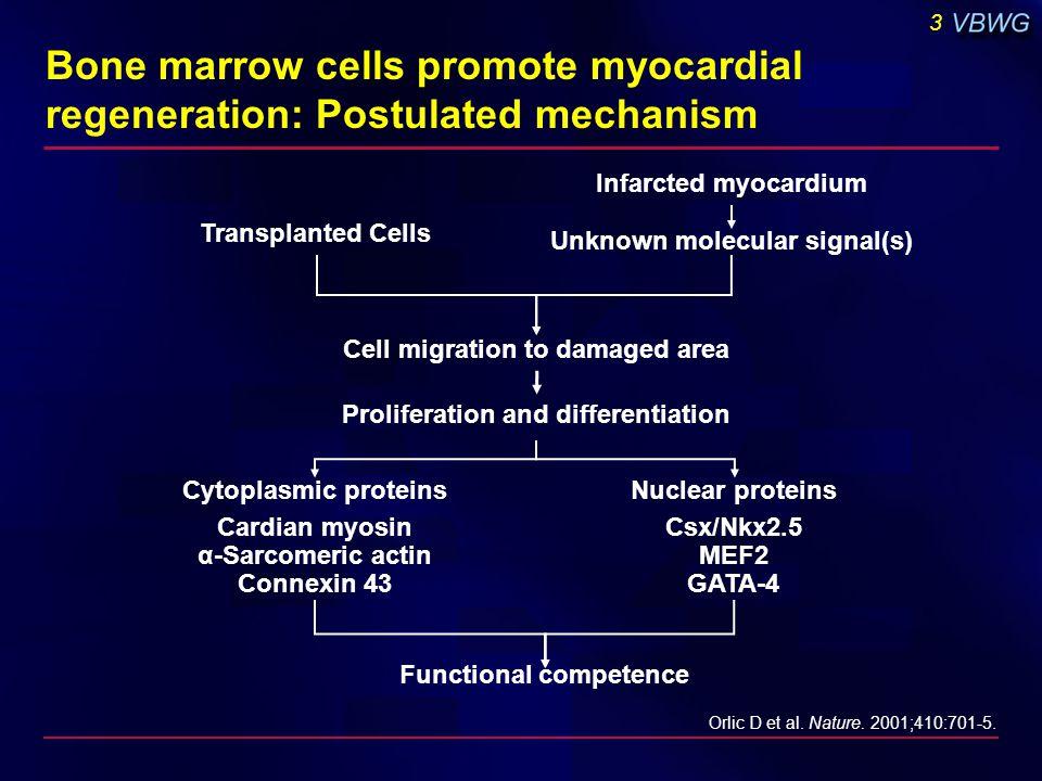 3 Bone marrow cells promote myocardial regeneration: Postulated mechanism Orlic D et al. Nature. 2001;410:701-5. Transplanted Cells Infarcted myocardi