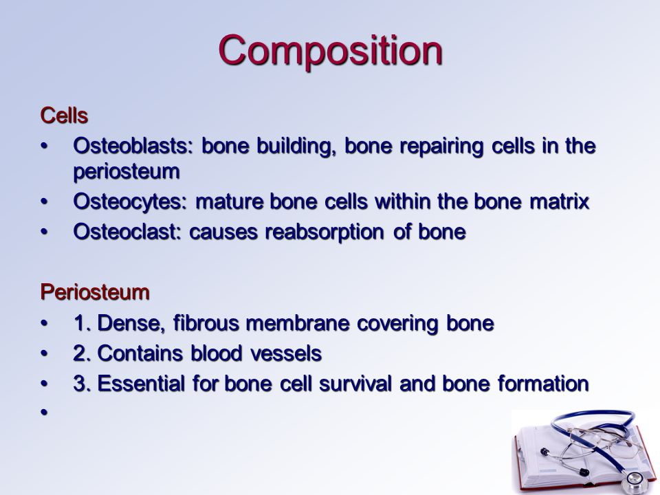 Composition Cells Osteoblasts: bone building, bone repairing cells in the periosteumOsteoblasts: bone building, bone repairing cells in the periosteum Osteocytes: mature bone cells within the bone matrixOsteocytes: mature bone cells within the bone matrix Osteoclast: causes reabsorption of boneOsteoclast: causes reabsorption of bonePeriosteum 1.