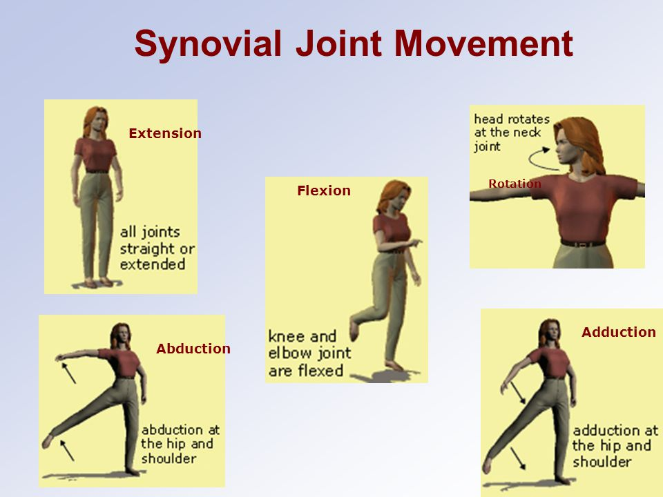 Abduction Extension Rotation Flexion Adduction Synovial Joint Movement