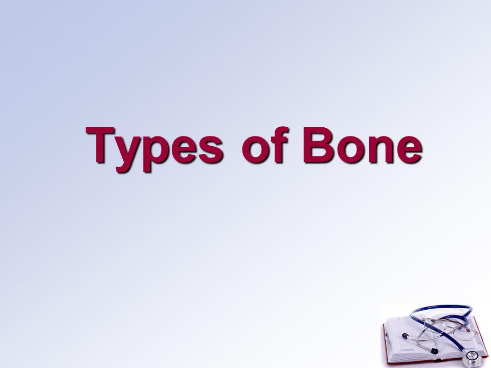 Types of Bone