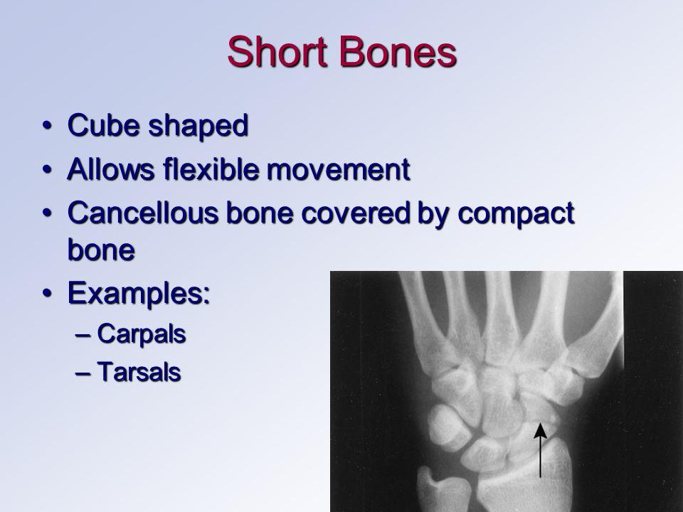 Short Bones Cube shapedCube shaped Allows flexible movementAllows flexible movement Cancellous bone covered by compact boneCancellous bone covered by compact bone Examples:Examples: –Carpals –Tarsals