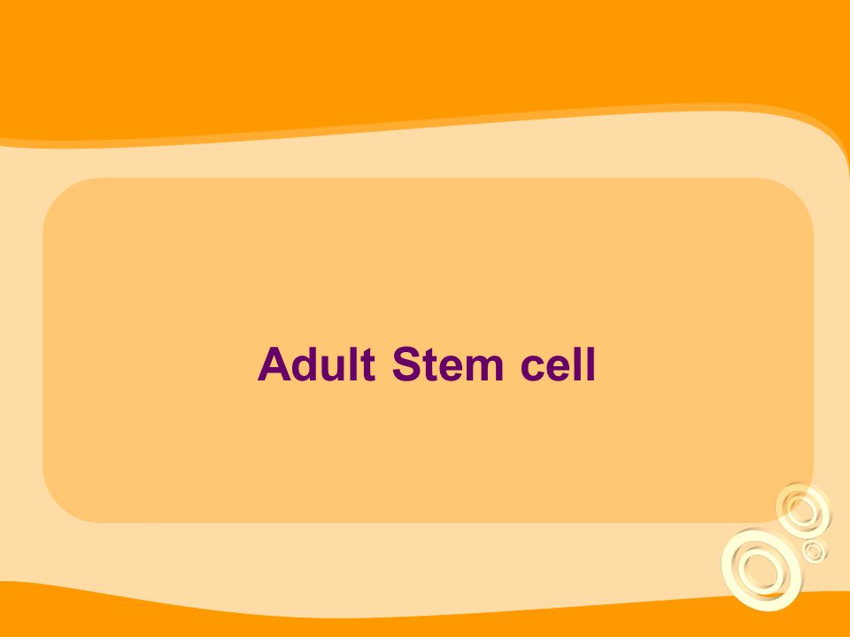 Adult Stem cell