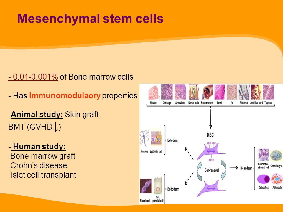 Mesenchymal stem cells - 0.01-0.001% of Bone marrow cells - Has Immunomodulaory properties -Animal study: Skin graft, BMT (GVHD ↓ ) - Human study: Bon