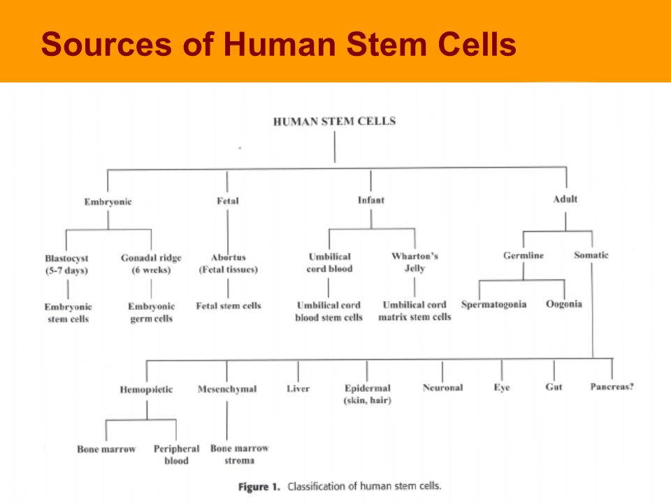 Sources of Human Stem Cells