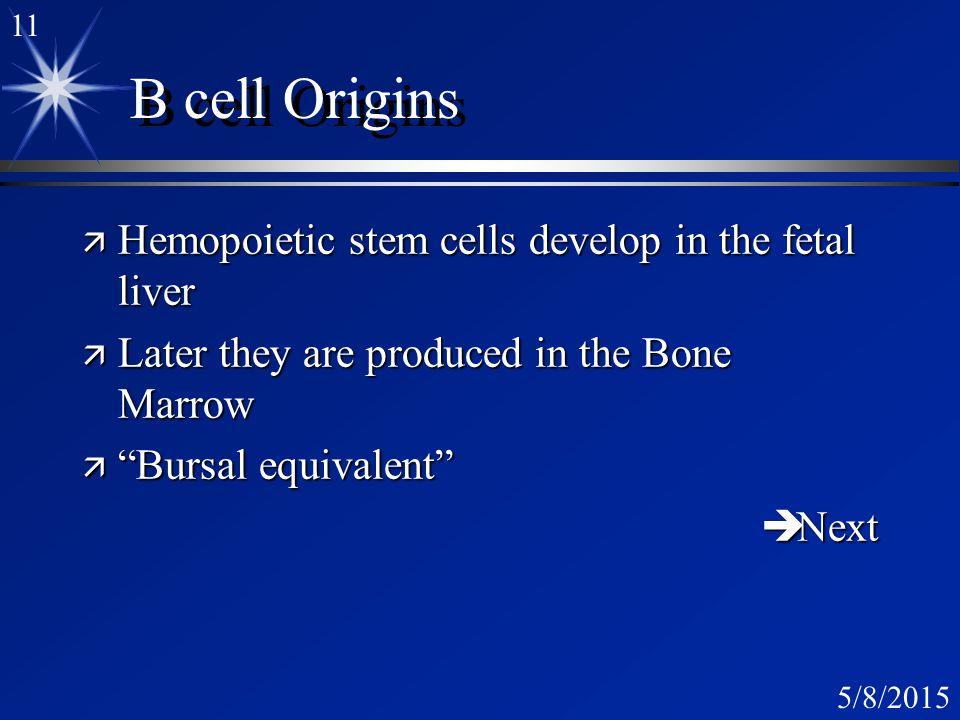 10 5/8/2015 Bursa: B cell germinal centers