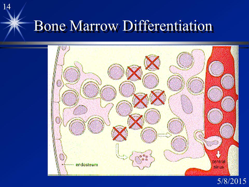 13 5/8/2015 Bone Marrow Scanning EM