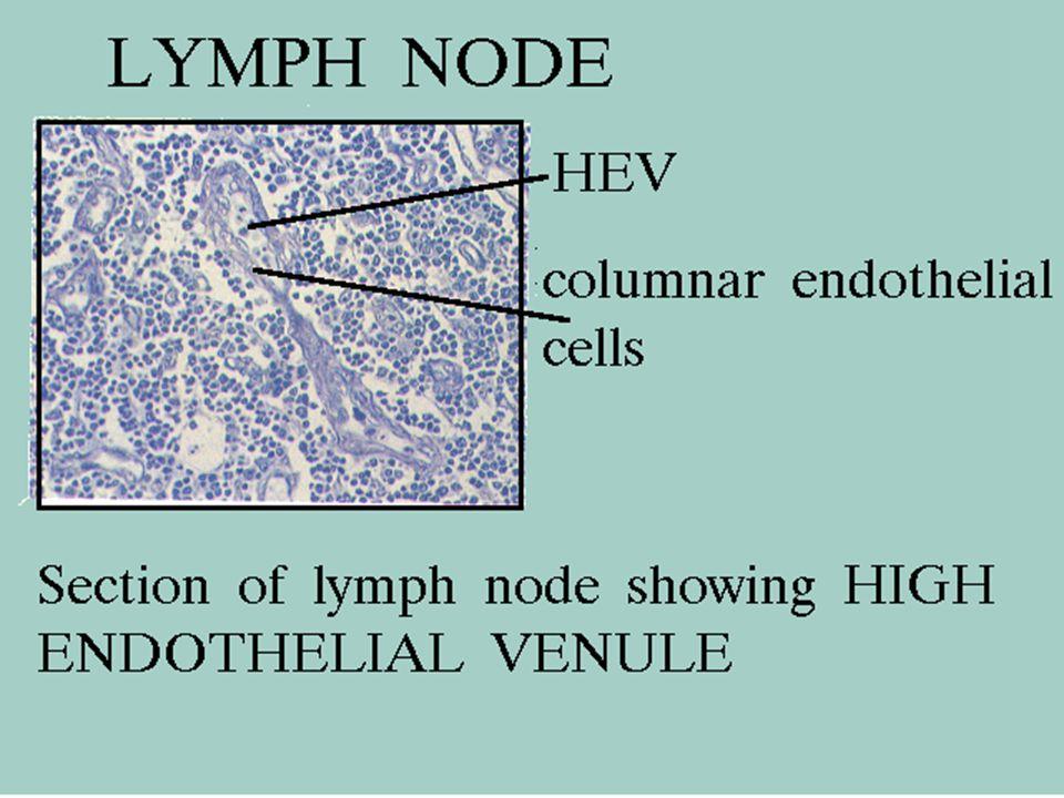 47 5/8/2015 Node: Diffuse Cortex