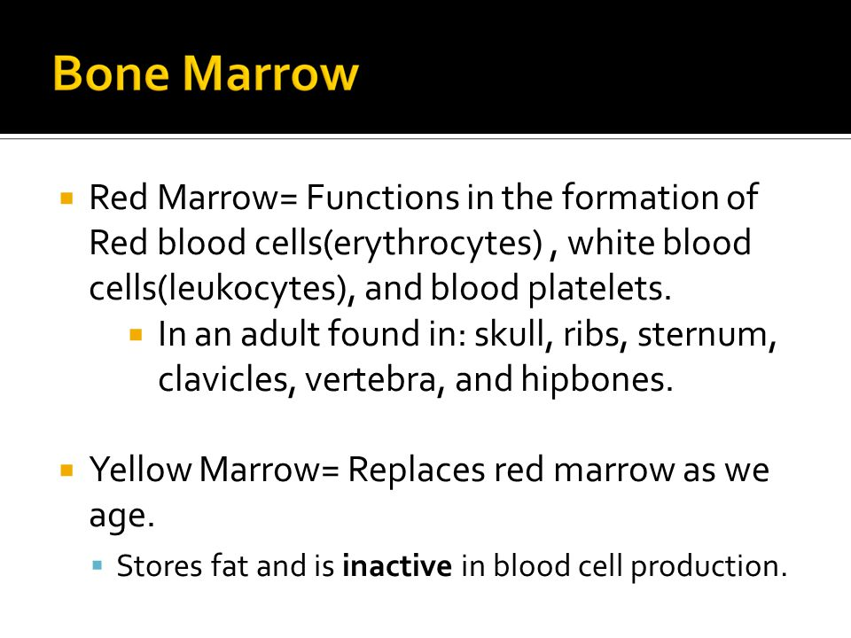  Red Marrow= Functions in the formation of Red blood cells(erythrocytes), white blood cells(leukocytes), and blood platelets.  In an adult found in: