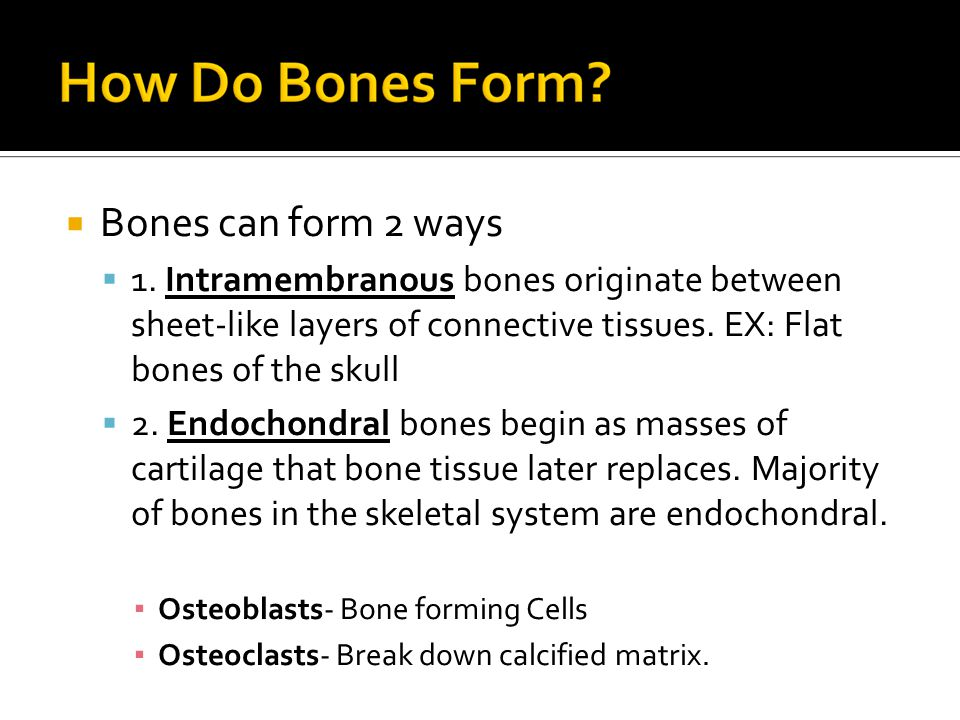  Bones can form 2 ways  1. Intramembranous bones originate between sheet-like layers of connective tissues. EX: Flat bones of the skull  2. Endocho