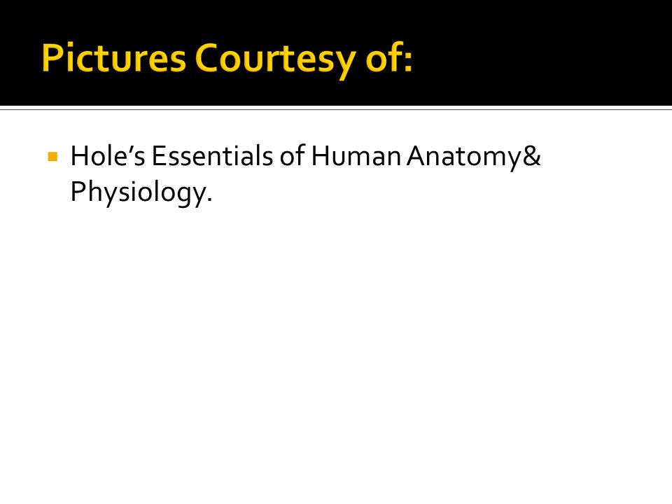  Hole's Essentials of Human Anatomy& Physiology.