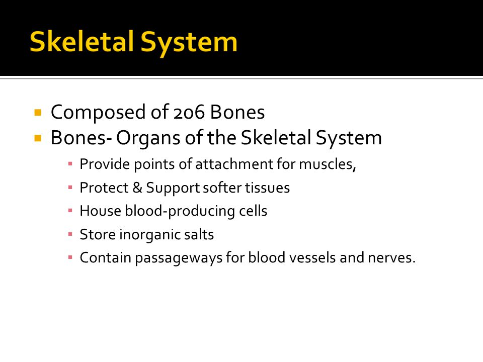  Composed of 206 Bones  Bones- Organs of the Skeletal System ▪ Provide points of attachment for muscles, ▪ Protect & Support softer tissues ▪ House blood-producing cells ▪ Store inorganic salts ▪ Contain passageways for blood vessels and nerves.