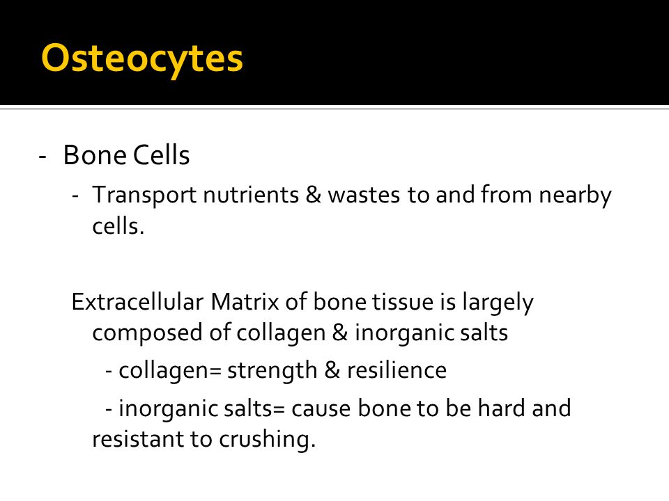 Osteocytes -Bone Cells -Transport nutrients & wastes to and from nearby cells.