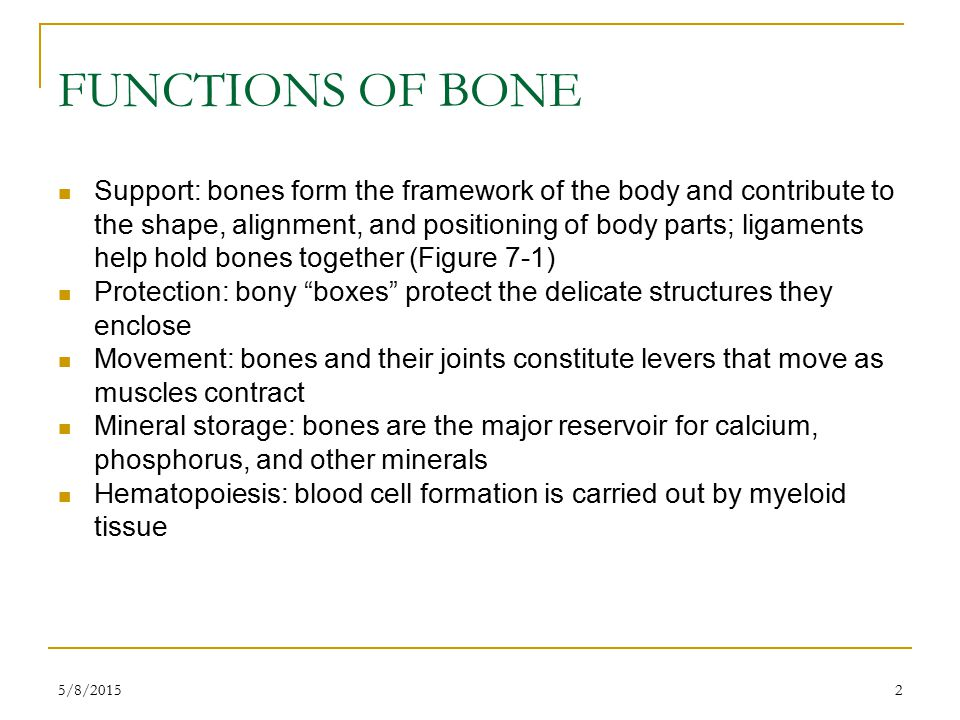 5/8/201533 DEVELOPMENT OF BONES Osteogenesis: development of bone from small cartilage model to adult bone (Figure 7-11) Intramembranous ossification  Occurs within a connective tissue membrane  Flat bones begin when groups of cells differentiate into osteoblasts  Osteoblasts are clustered together in ossification center  Osteoblasts secrete matrix material and collagenous fibrils