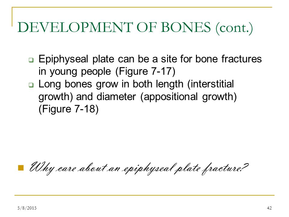 5/8/201542 DEVELOPMENT OF BONES (cont.)  Epiphyseal plate can be a site for bone fractures in young people (Figure 7-17)  Long bones grow in both length (interstitial growth) and diameter (appositional growth) (Figure 7-18) Why care about an epiphyseal plate fracture?