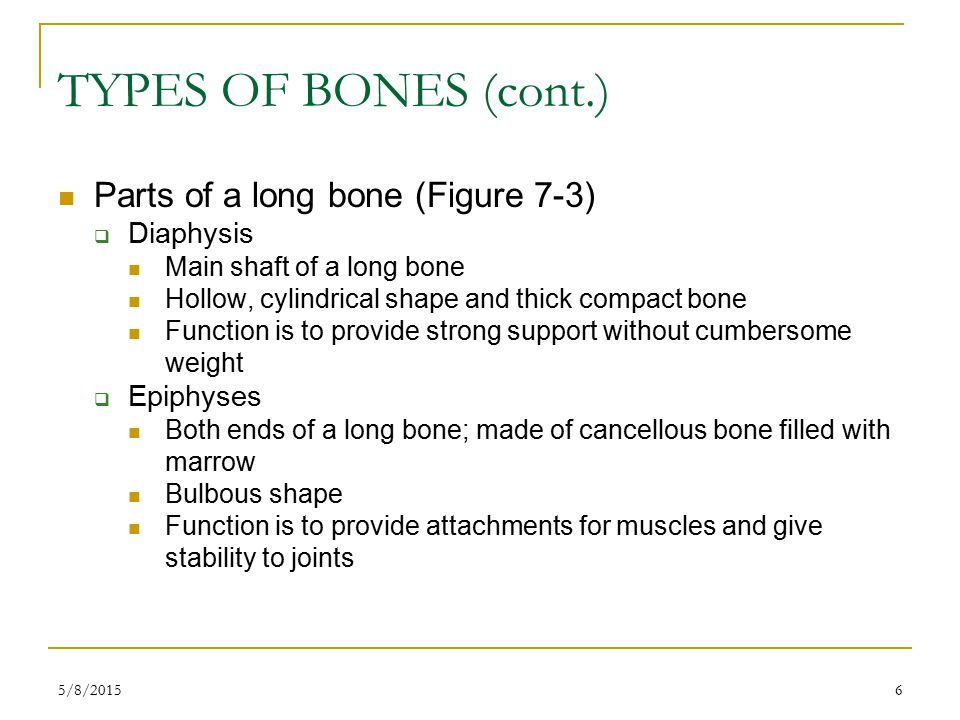 6 TYPES OF BONES (cont.) Parts of a long bone (Figure 7-3)  Diaphysis Main shaft of a long bone Hollow, cylindrical shape and thick compact bone Function is to provide strong support without cumbersome weight  Epiphyses Both ends of a long bone; made of cancellous bone filled with marrow Bulbous shape Function is to provide attachments for muscles and give stability to joints