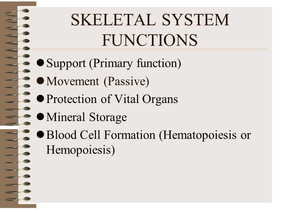 SKELETAL SYSTEM FUNCTIONS Support (Primary function) Movement (Passive) Protection of Vital Organs Mineral Storage Blood Cell Formation (Hematopoiesis or Hemopoiesis)