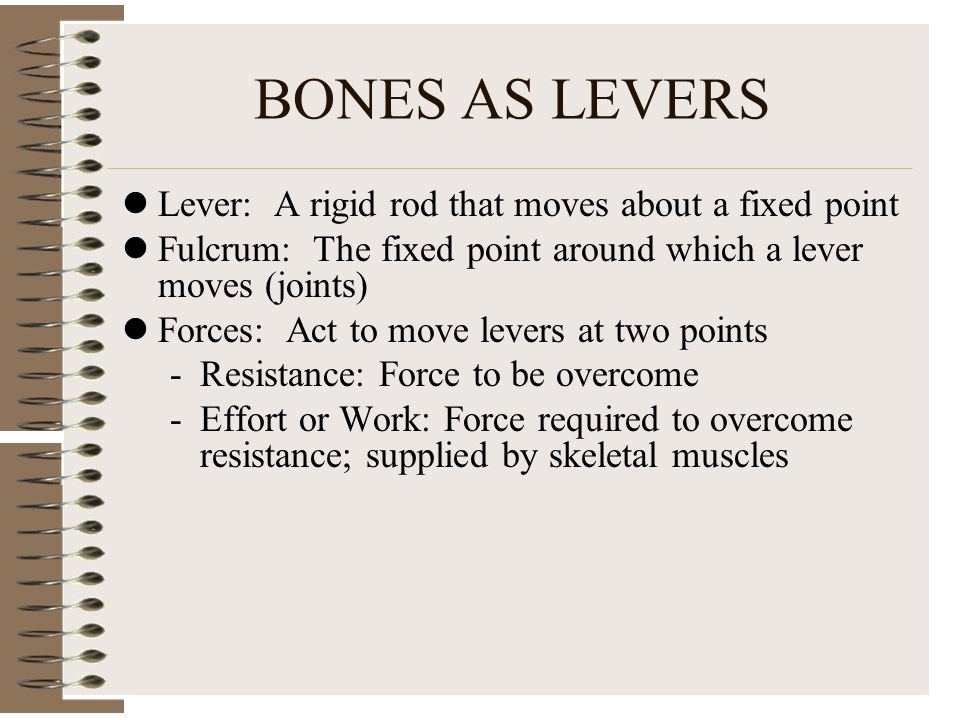 BONES AS LEVERS Lever: A rigid rod that moves about a fixed point Fulcrum: The fixed point around which a lever moves (joints) Forces: Act to move levers at two points -Resistance: Force to be overcome -Effort or Work: Force required to overcome resistance; supplied by skeletal muscles
