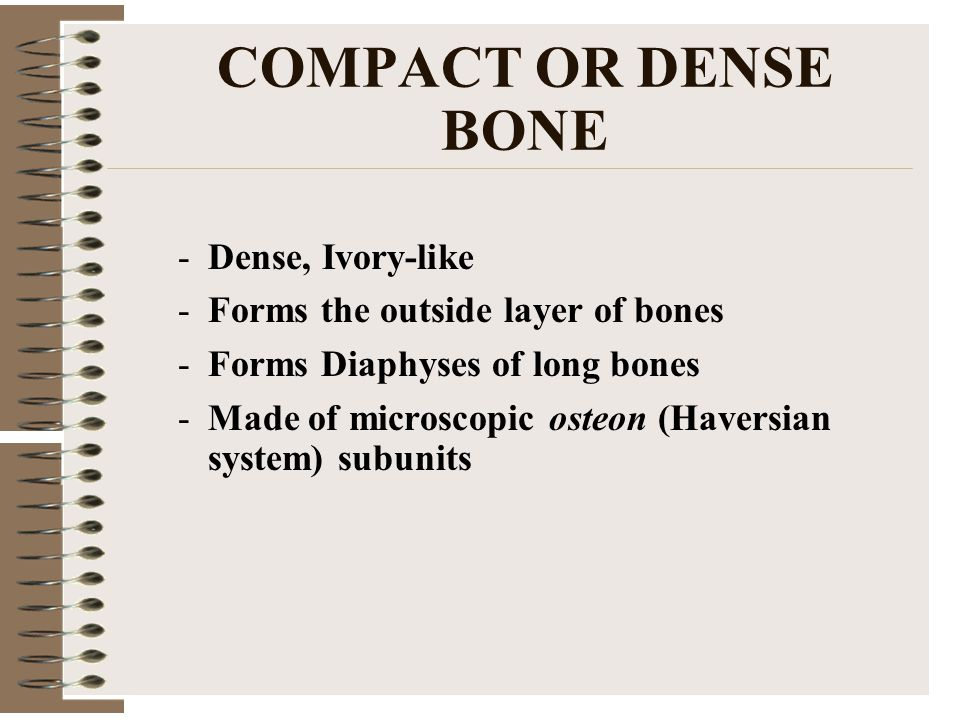 COMPACT OR DENSE BONE -Dense, Ivory-like -Forms the outside layer of bones -Forms Diaphyses of long bones -Made of microscopic osteon (Haversian system) subunits