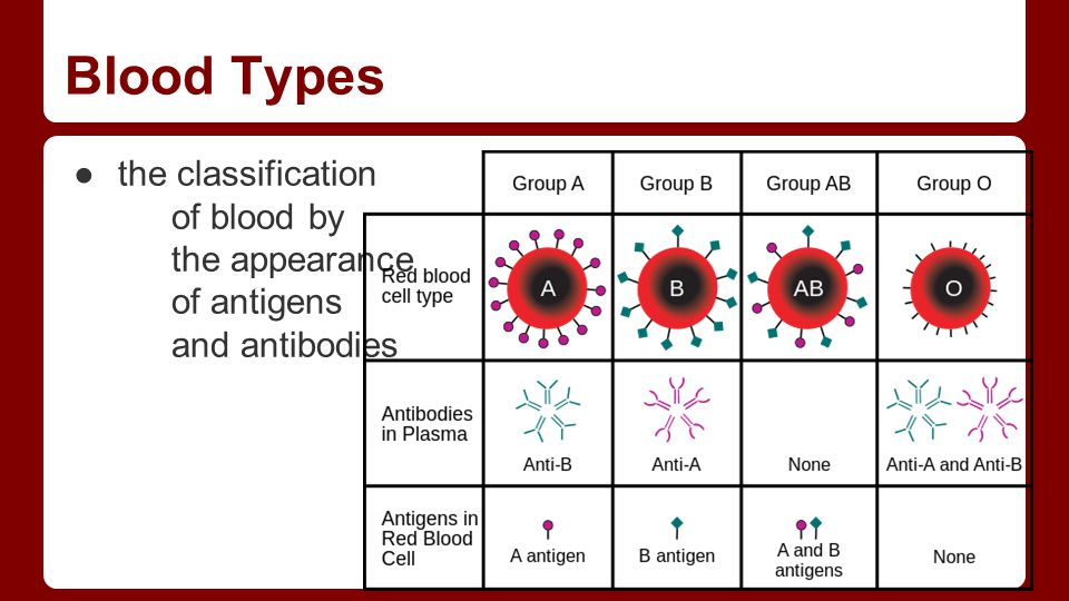 Blood Types ●the classification of blood by the appearance of antigens and antibodies