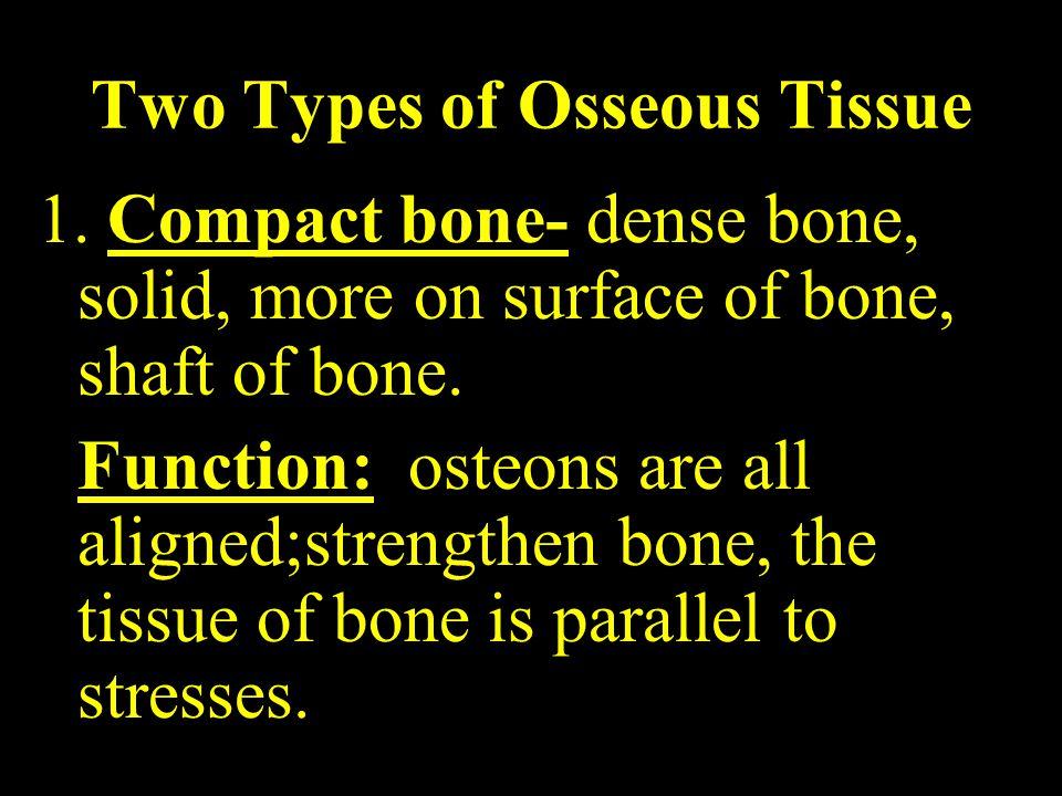 Two Types of Osseous Tissue 1.