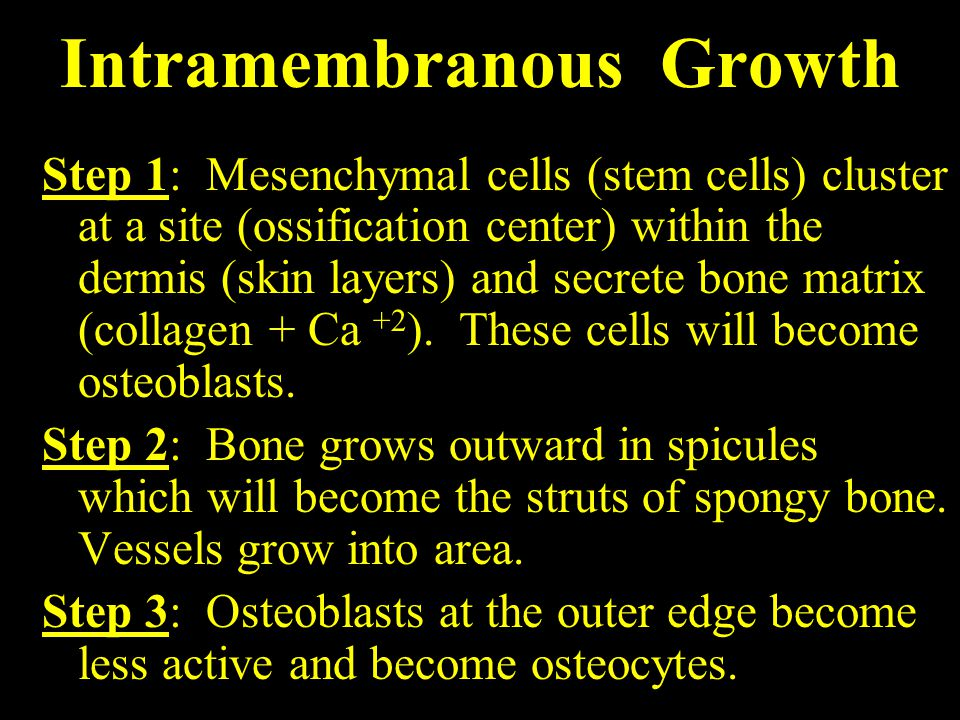 Intramembranous Growth Step 1: Mesenchymal cells (stem cells) cluster at a site (ossification center) within the dermis (skin layers) and secrete bone matrix (collagen + Ca +2 ).