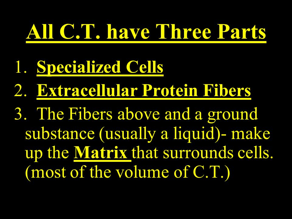 All C.T. have Three Parts 1. Specialized Cells 2.