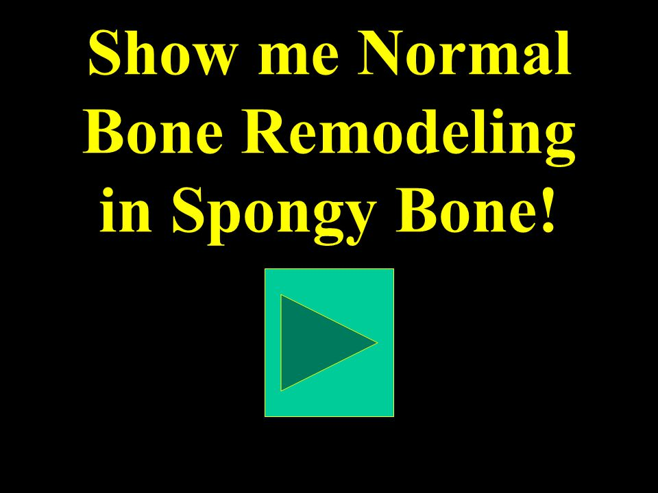 Show me Normal Bone Remodeling in Spongy Bone!