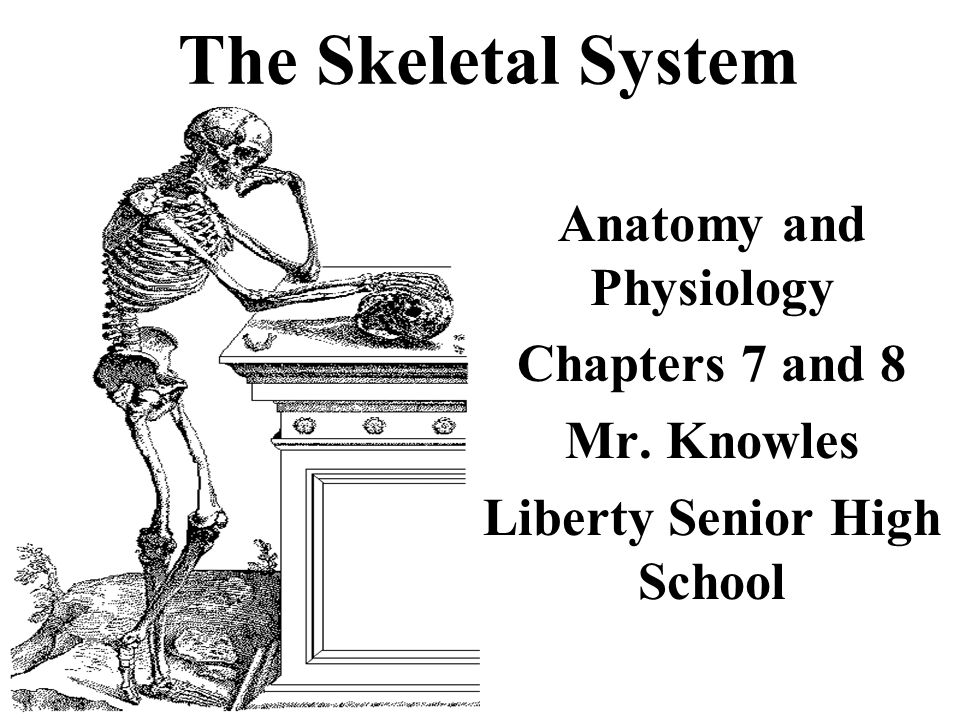 The Skeletal System Anatomy and Physiology Chapters 7 and 8 Mr. Knowles Liberty Senior High School