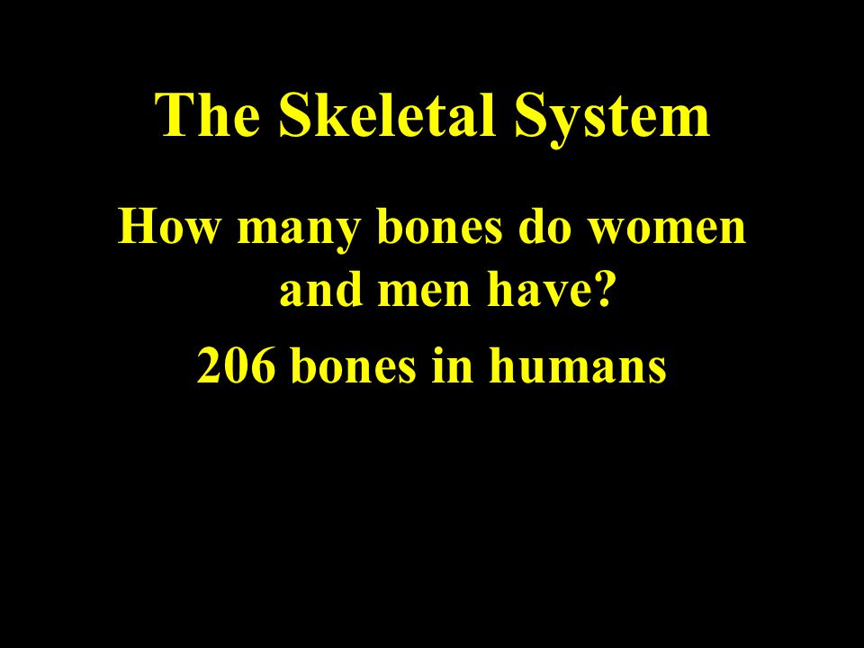 The Skeletal System How many bones do women and men have 206 bones in humans