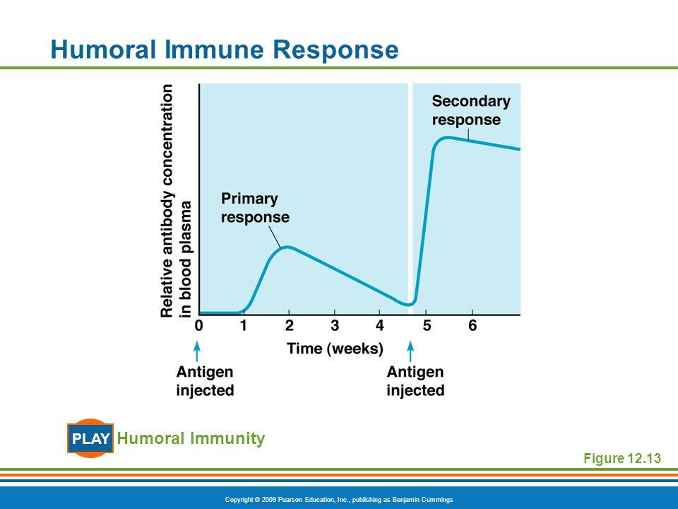 Copyright © 2009 Pearson Education, Inc., publishing as Benjamin Cummings Figure 12.13 Humoral Immune Response Humoral Immunity PLAY
