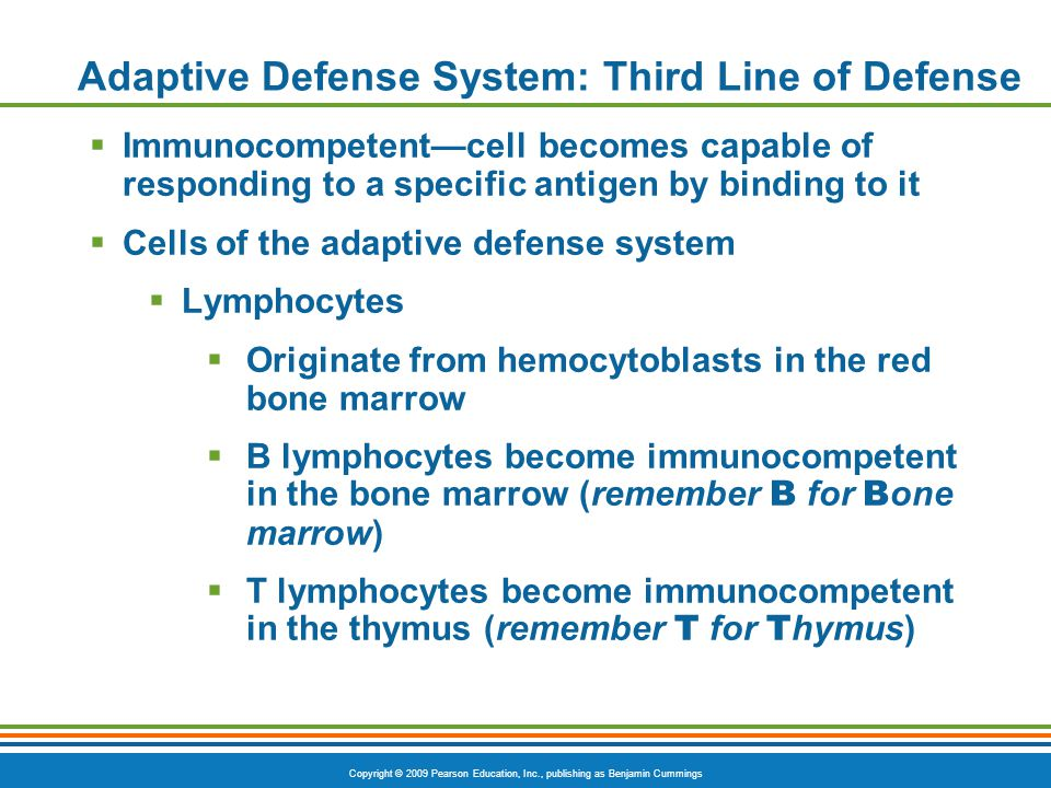 Copyright © 2009 Pearson Education, Inc., publishing as Benjamin Cummings Adaptive Defense System: Third Line of Defense  Immunocompetent—cell become
